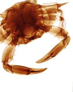 ca810d75-091c-4ffe-9c7c-d708e1eca044_Crab-x-ray